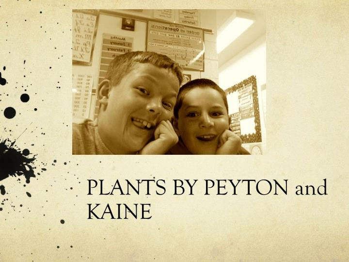 Plants by peyton and kaine