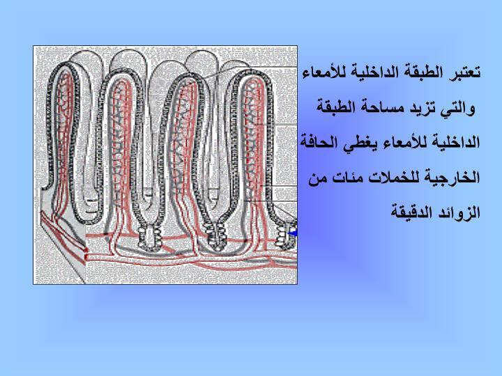 تعتبر الطبقة الداخلية للأمعاء
