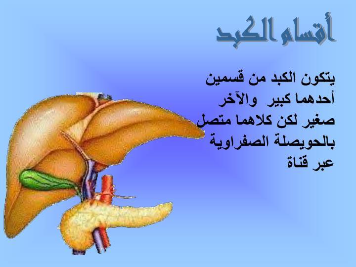 أقسام الكبد
