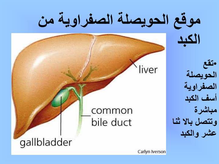 موقع الحويصلة الصفراوية من الكبد