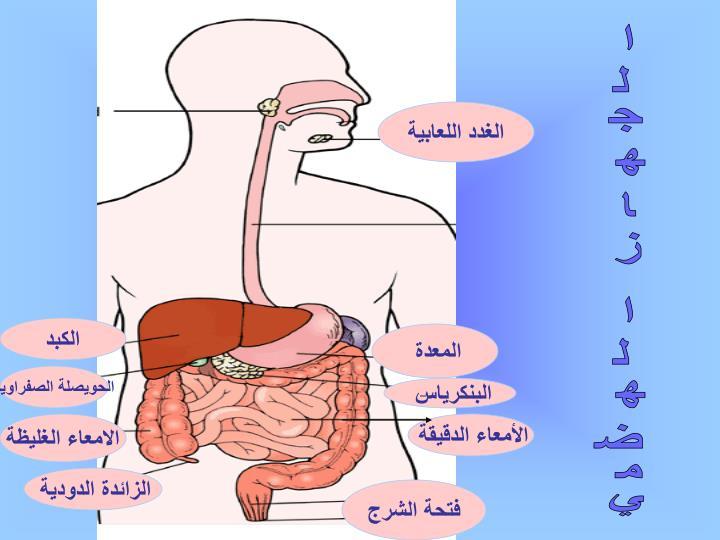 الغدد اللعابية