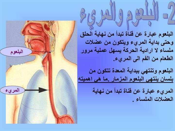 2- البلعوم والمريء