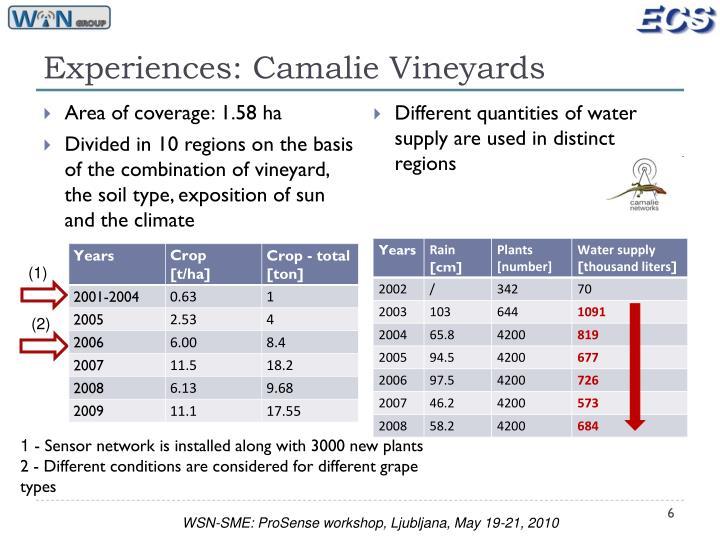 Experiences: Camalie Vineyards