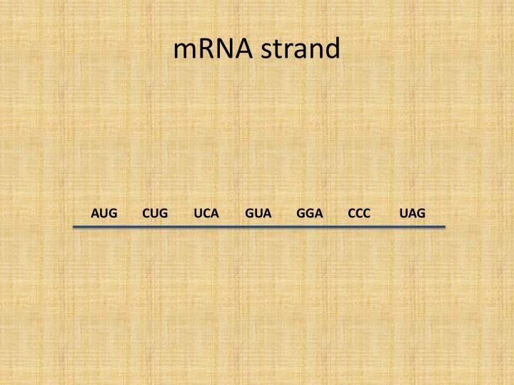 mRNA strand