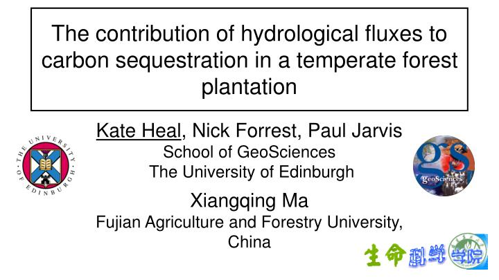 The contribution of hydrological fluxes to carbon sequestration in a temperate forest plantation