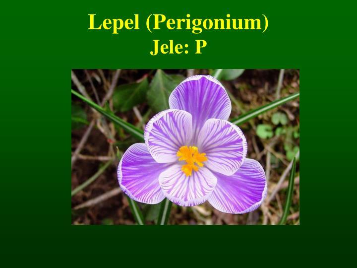 Lepel (Perigonium)