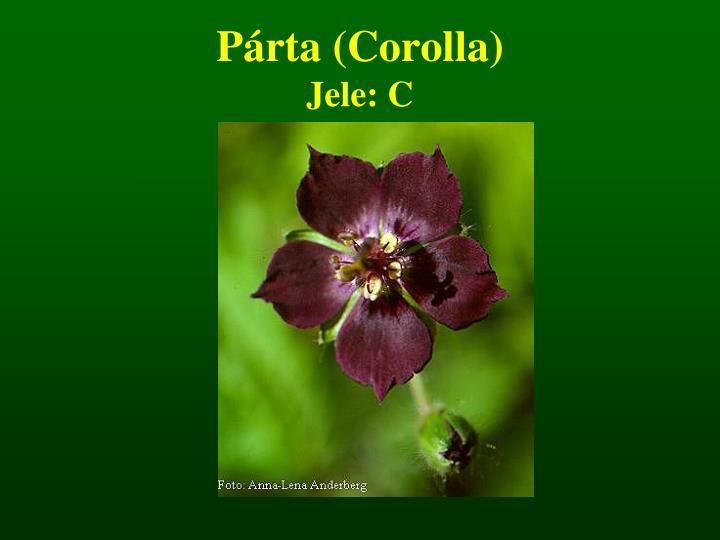 Párta (Corolla)