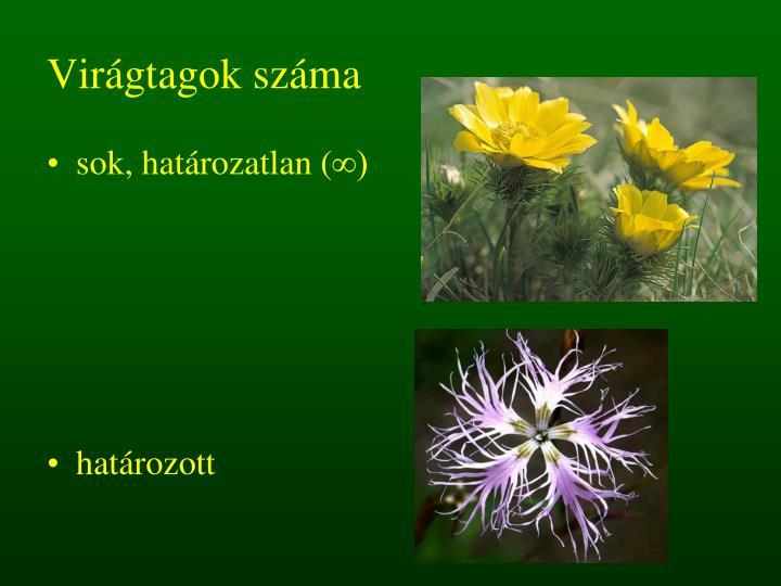 Virágtagok száma
