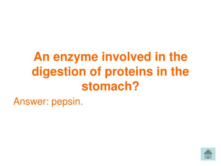 An enzyme involved in the digestion of proteins in the stomach?