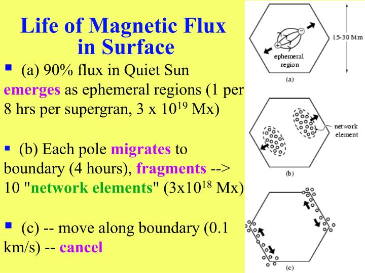 Life of Magnetic Flux