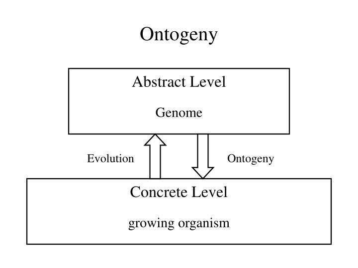 Ontogeny