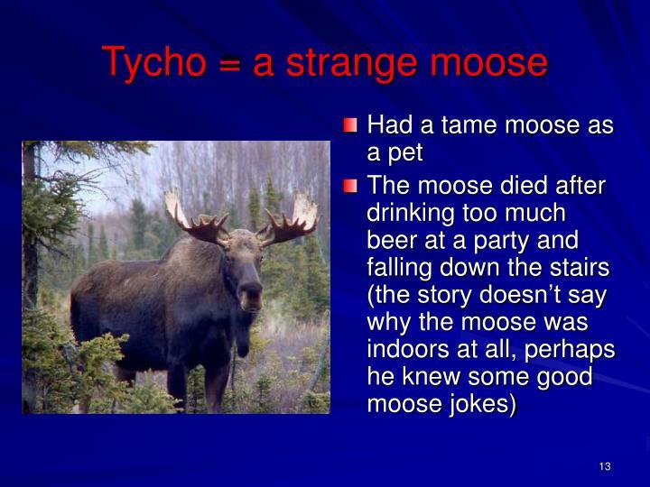 Tycho = a strange moose