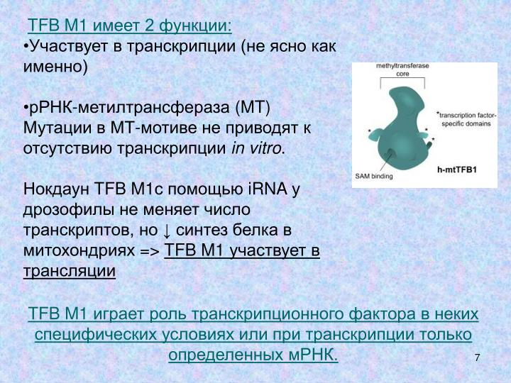 TFB M1