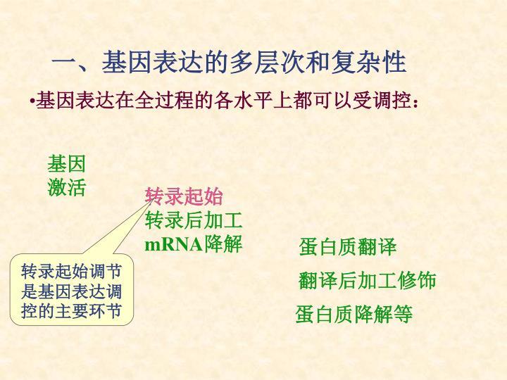 蛋白质翻译