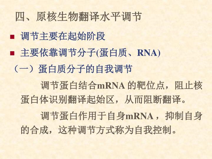 四、原核生物翻译水平调节