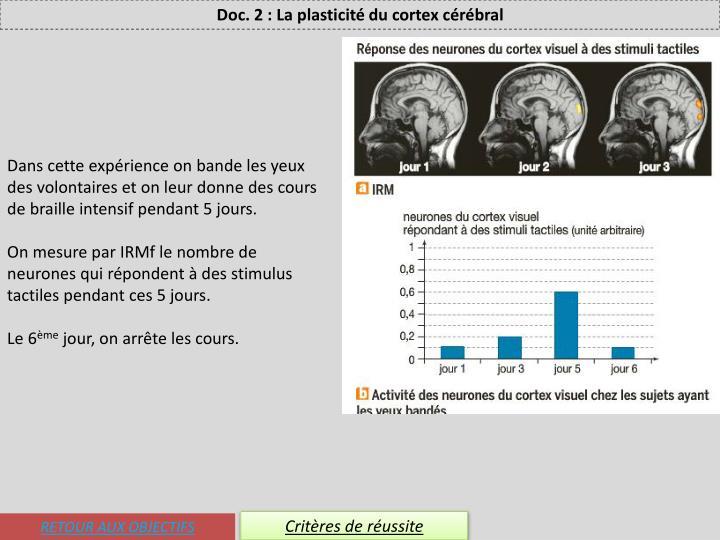 Doc. 2 : La plasticité du cortex cérébral