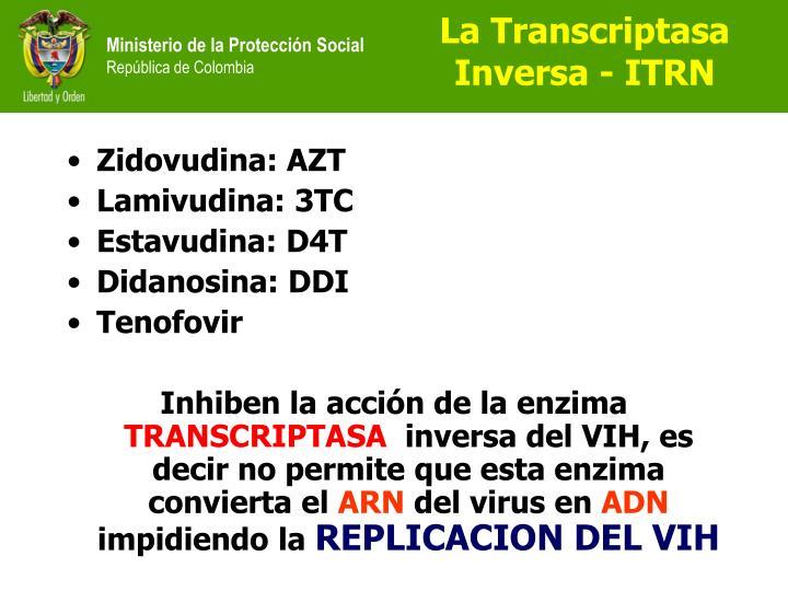 La Transcriptasa Inversa - ITRN
