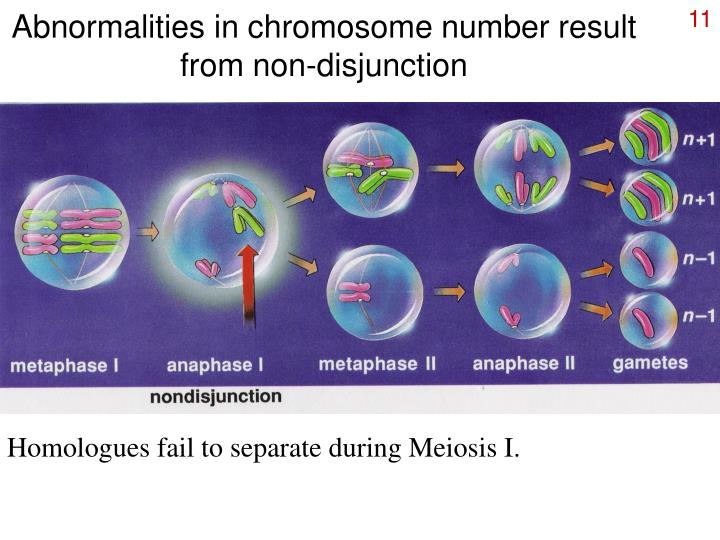 Abnormalities in chromosome number result from non-disjunction