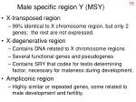 male specific region y msy