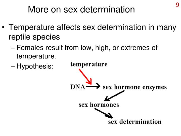 More on sex determination
