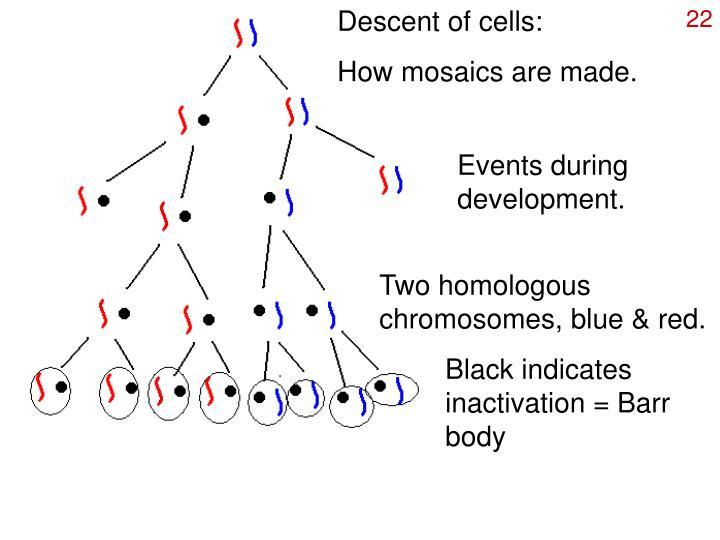 Descent of cells: