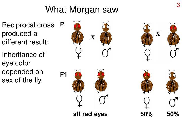 What Morgan saw