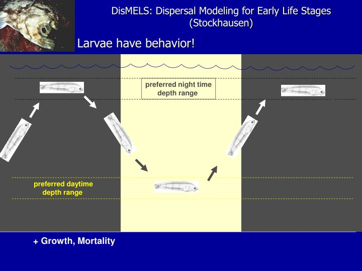 DisMELS: Dispersal Modeling for Early Life Stages (Stockhausen)