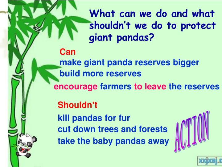 What can we do and what shouldn't we do to protect giant pandas?