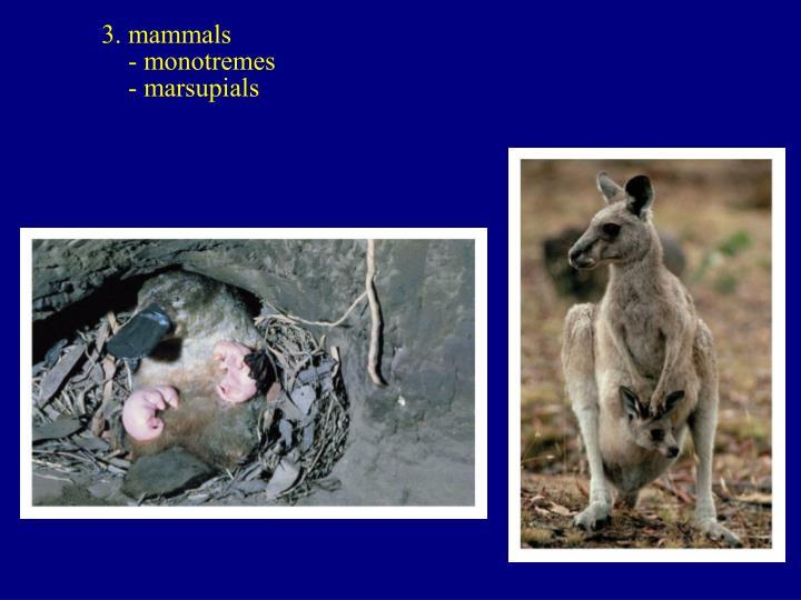 3. mammals