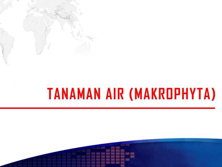 TANAMAN AIR (MAKROPHYTA)