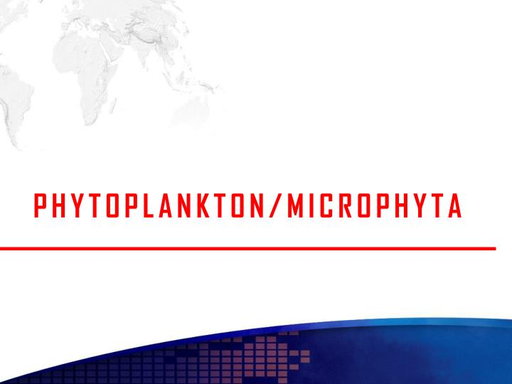 PHYTOPLANKTON/MICROPHYTA