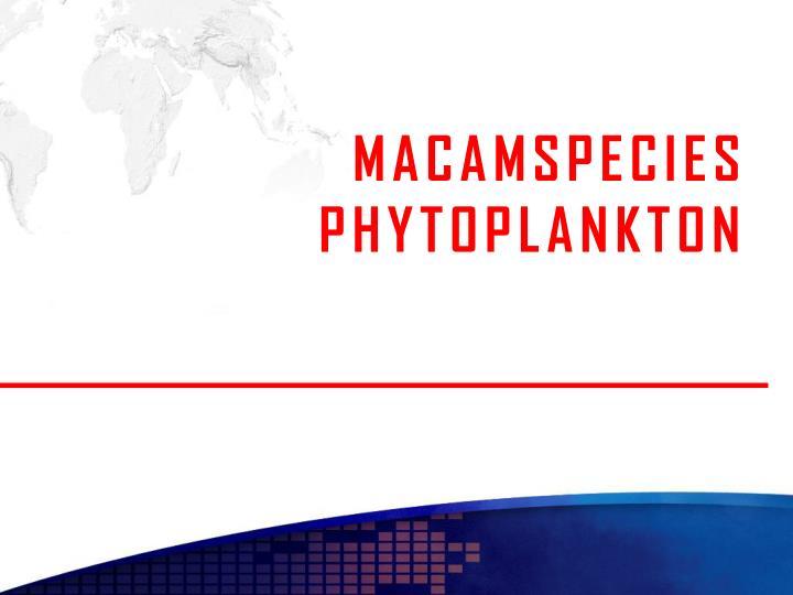 MACAMSPECIES PHYTOPLANKTON
