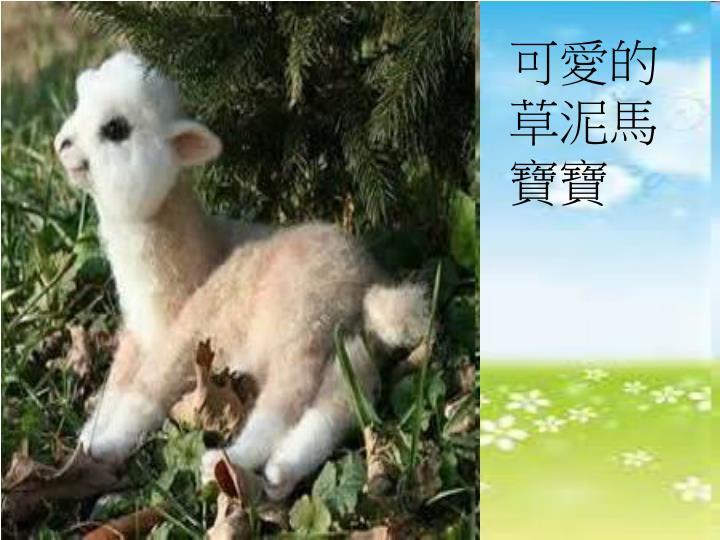 可愛的草泥馬寶寶