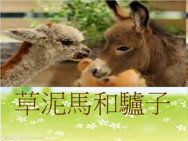 草泥馬和驢子