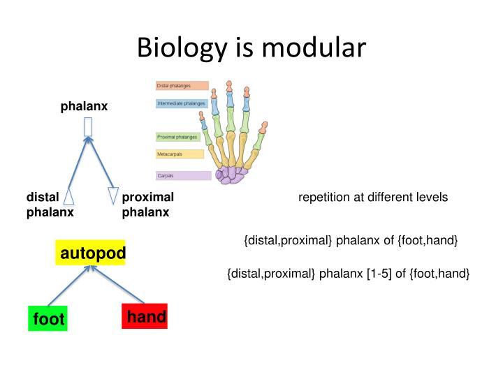 Biology is modular