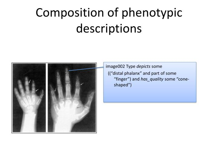 Composition of phenotypic descriptions