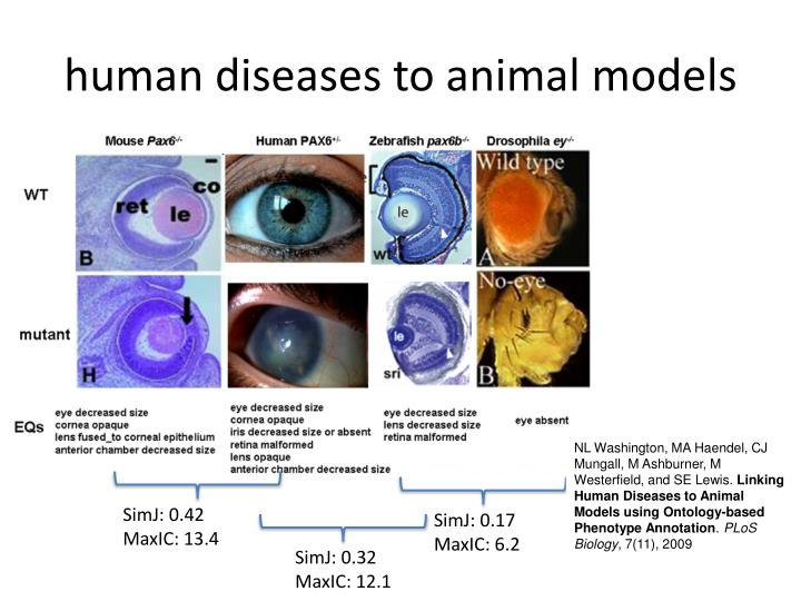 human diseases to animal models