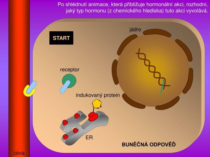 Po shldnut animace, kter pibliuje hormonln akci, rozhodni, jak typ hormonu (z chemickho hlediska) tuto akci vyvolv.