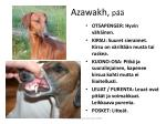 azawakh p1