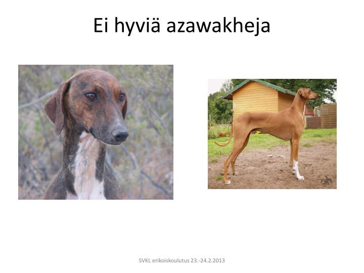 Ei hyviä azawakheja