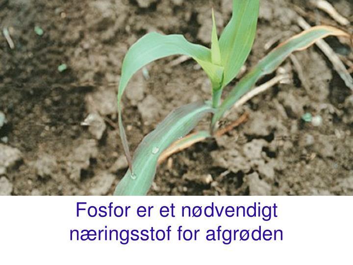 Fosfor er et nødvendigt