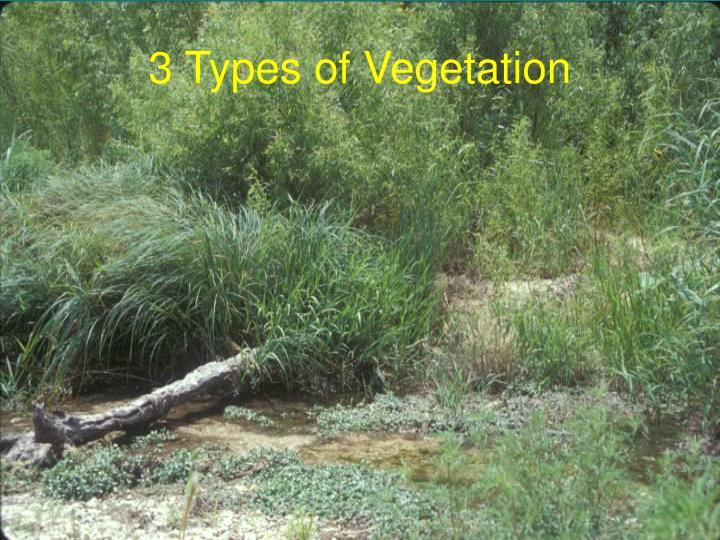 3 Types of Vegetation