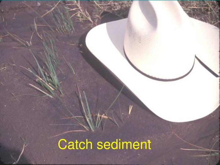 Catch sediment
