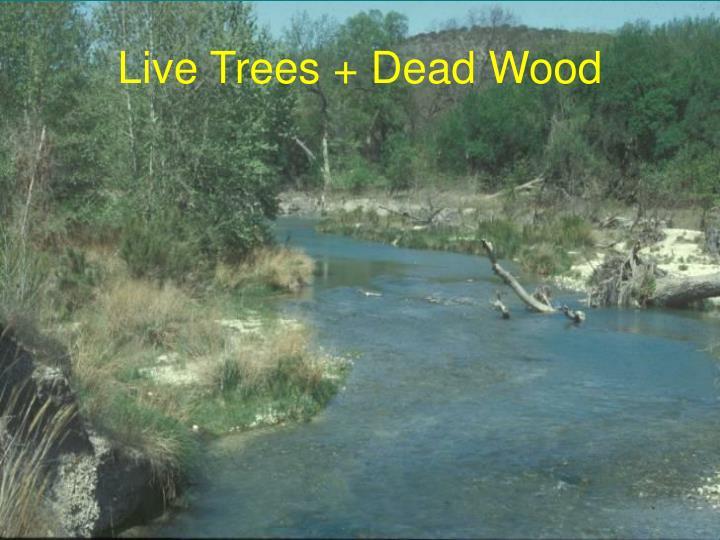Live Trees + Dead Wood