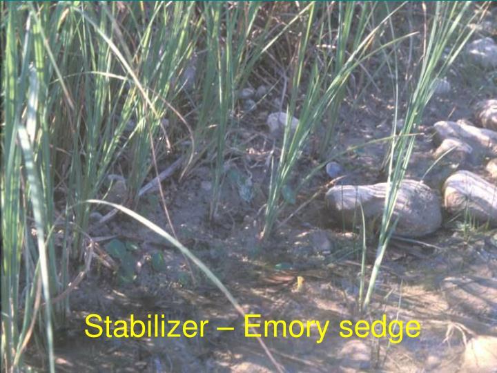 Stabilizer – Emory sedge