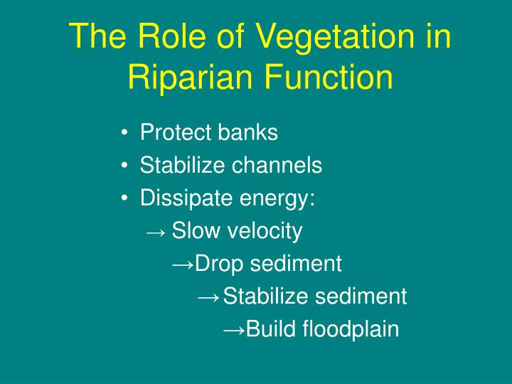 The Role of Vegetation in