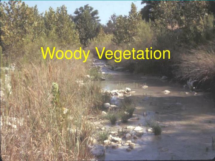 Woody Vegetation
