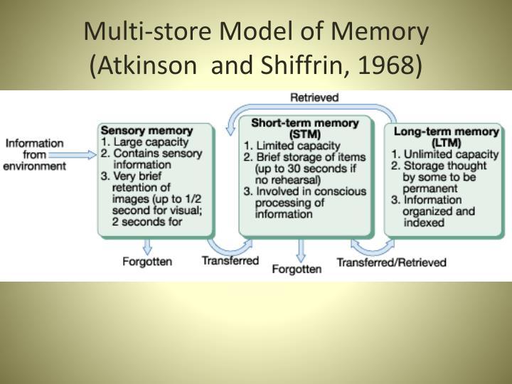 Multi-store Model of Memory