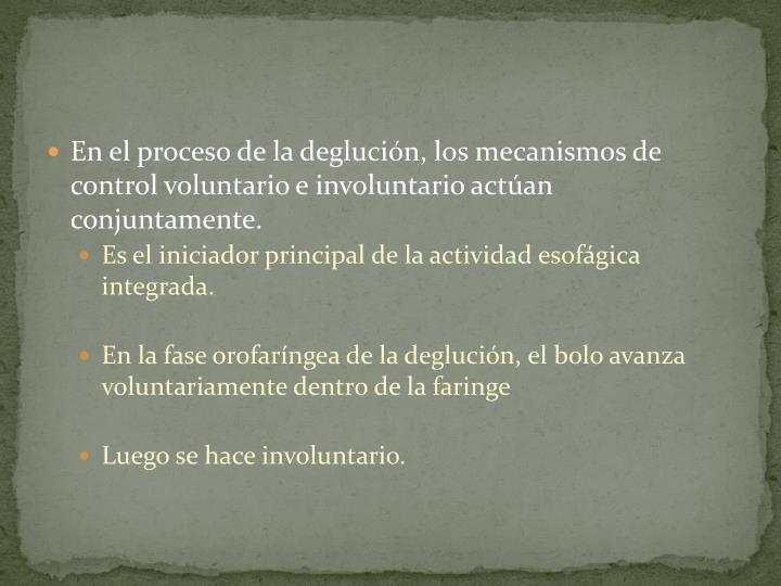 En el proceso de la deglución, los mecanismos de control voluntario e involuntario actúan conjuntamente.