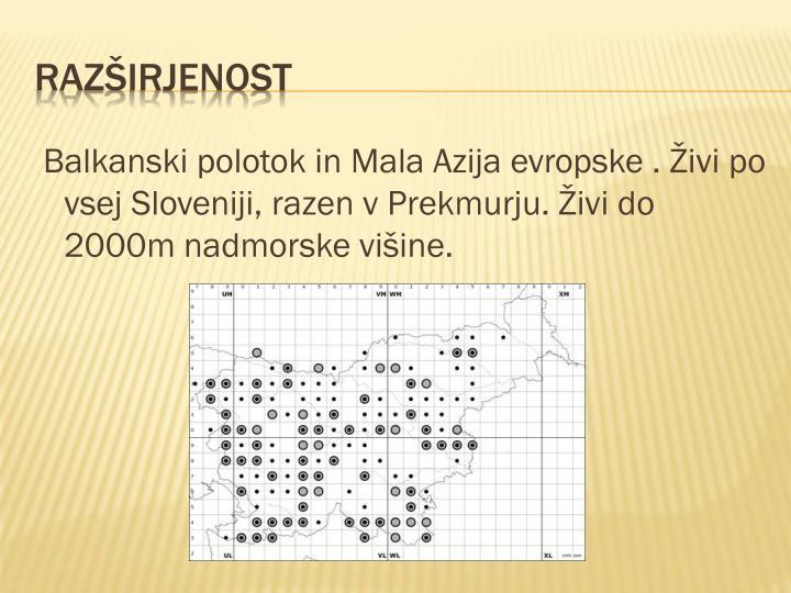Balkanski polotok in Mala Azija evropske . Živi po vsej Sloveniji, razen v Prekmurju. Živi do 2000m nadmorske višine.